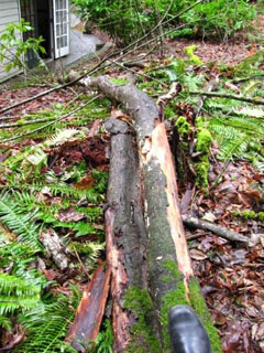 Katy's Fallen Tree - That Was Close!
