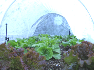 Row Cover Hoop Houses Other Vegetable Garden Tools Garden Mentors