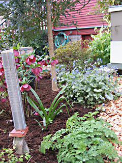 Helleborus, Bleeding Heart and Brunnera Blooming Near the Honey Hive