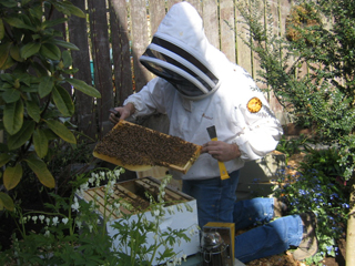 Corky of Ballard Bee Company Checking the Honey Bee Hive