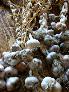 Cured and Braided Garlic Ready to Hang in the Cellar