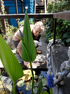 Mari Fine Tuning Plants in the Water Feature