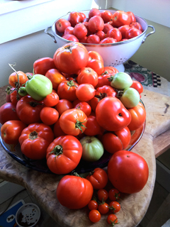 Mid-September: A Bounty of Garden Tomatoes