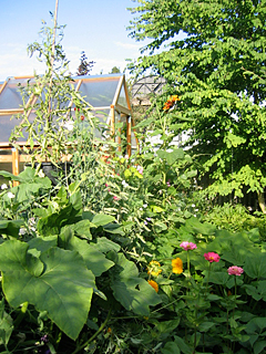 Greenhouse & Veggie Garden Mid Summer