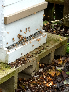 Bring out your dead: Honeybees enjoying a warmish, dryish moment in winter