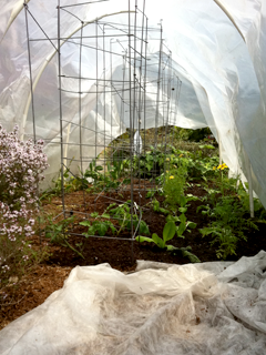 May Planted Hoop House: Carrots, Tomatoes, Lettuce, Beets, Thyme, Borage, Calendula...