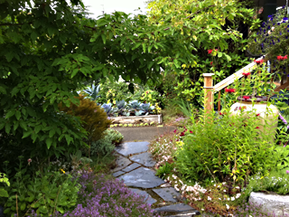 Flagstone path, Bubbling Pot &amp; Purple Cabbages in the front