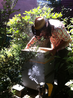 Corky of Ballard Bee Company Inspecting the Honey Bee Hive