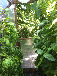 Greenhouse inside view