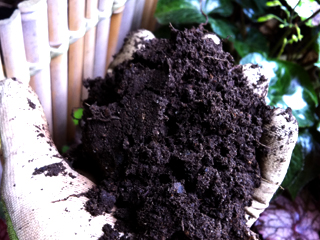 Healthy Soil