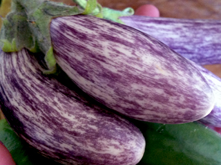 Fairy Tale Eggplants