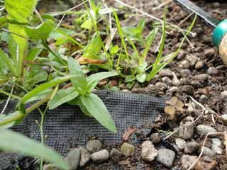 why landscape fabric weed barrier doesn t work solutions