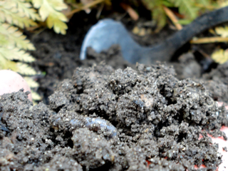 Rich Garden Soil