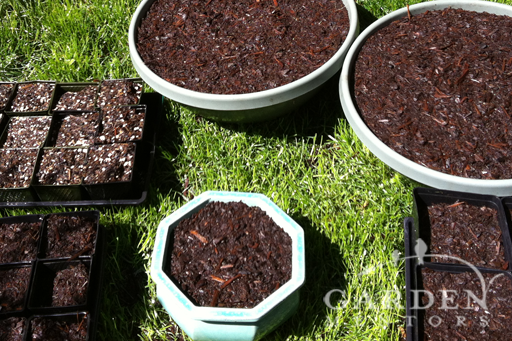 Containers filled with potting soil