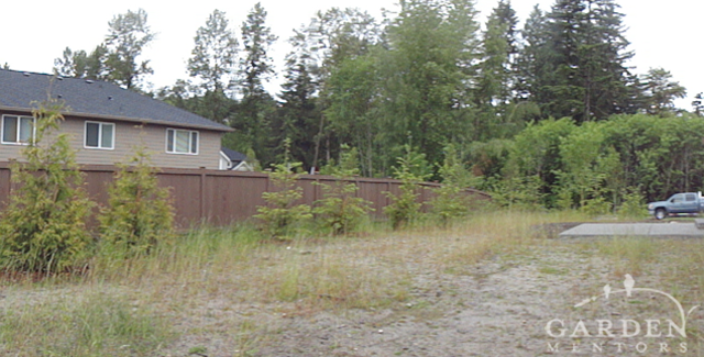 View from NW Back Corner of Yard Before.