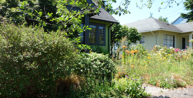 Front Entry Weedy Jungle Before