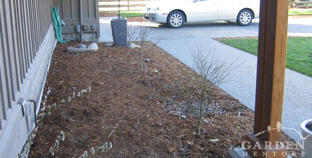 View of Front Foundation Border Before