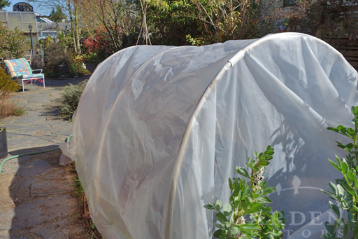 Hoop House & Greenhouse