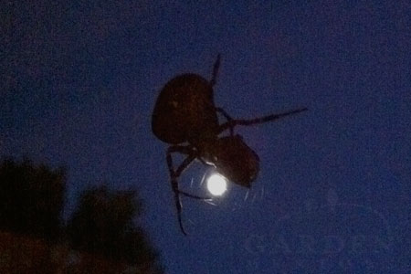 Spider in moonlight