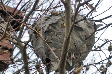 Not all nests require bee removal programs