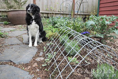 Several examples of having a beautiful dog zone in your garden.