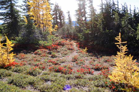 Pacific Crest Trail in Autumn
