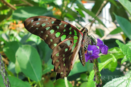 Butterfly in Lewis Ginter Botanical Gardens Conservatory