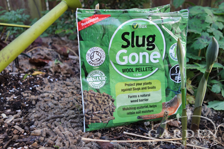 Slug Gone in Garden