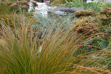 Orange Sedge Ornamental Grass Ornamental grasses demystified garden mentors orange sedge carex testacea has great evergreen texture for dry sunny gardens it has slightly sharp edges which helps identify it as a sedge workwithnaturefo