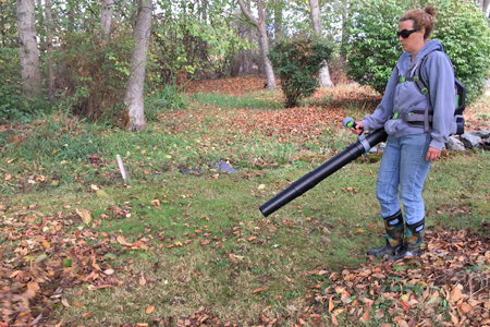 Using a leaf blower in a forest