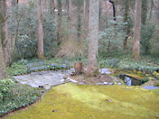 Winter View of Norie's Moss Garden