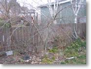 2008_04_peach_dormant_h.jpg