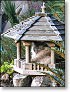 Tuffy-the-cat in her Birdhouse Palace