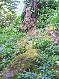 Naturalized Beauty at Dunn Gardens