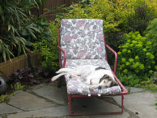 Even a Lazy Dog's Scent Can Make a Difference