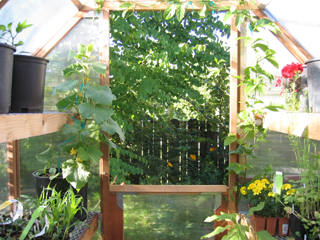 A View out the Greenhouse Back Door