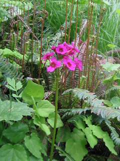Ferns & Flowers Showing Off at the 2008 Dunn Wine Tasting Tour