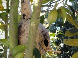 Birdhouse Chickadee Gourd Home