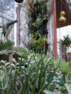 DIG's Garden Wall Unifies with Neighboring Lusher Life Seaside Dock Garden