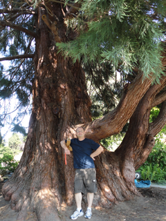 Big, wide, sprawling Sequoia