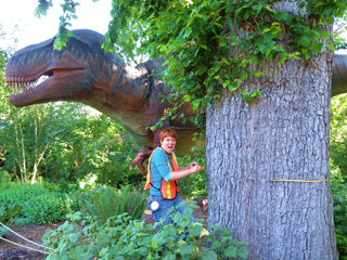 Undaunted by a nearby Dinosaur, Katy Evaluates an American Elm at the Woodland Park Zoo