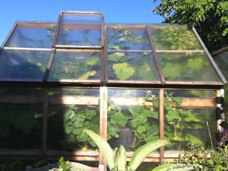 Greenhouse View 2