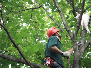 arborist & cat in tree