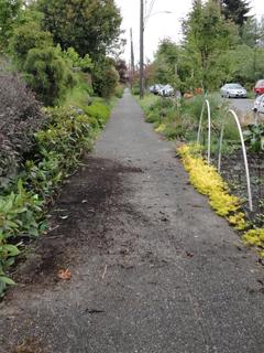 Pruned Hedge