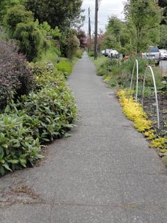 Hedge Encroaching on Sidewalk