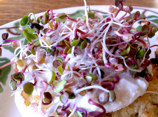Sprouts on toast with egg
