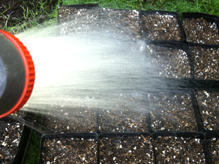 Water the Soil & Let Drain Before Planting in Containers