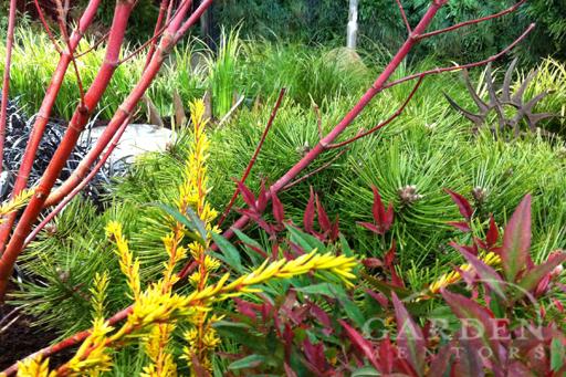 2012 NWFGS Display Garden