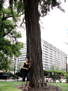 Standing Beneath a Giant GinkgoTree in Farragut Square