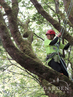 Katy in an ISA tree climbing competition